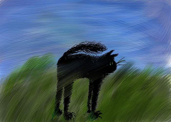 A cat in thewind